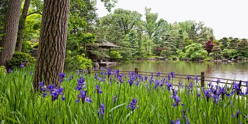 GardenPhotos_StrollingPond_Spring